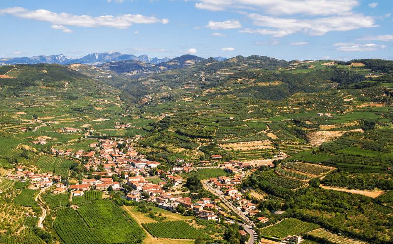 Conte di Campiano Brindisi vinice uprostred leta