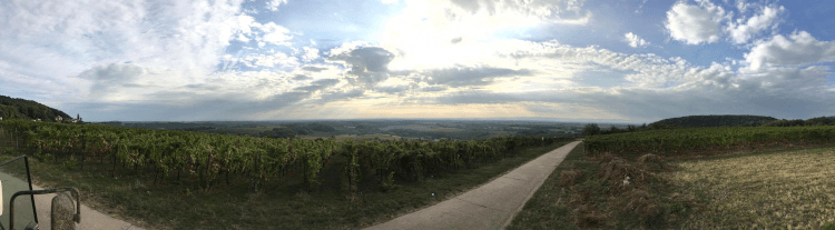 Vinohrady Lukasa Kesselringa v nemeckom regióne Falcko